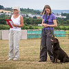 Gundog Club Level 1 & 2 Asessment Helen Phillips-16