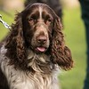 Field Spaniels Society Training Day 7D1-5