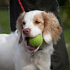 Field Spaniels Society Training Day 7D2-2