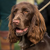 Field Spaniels Society Training Day 7D1-7