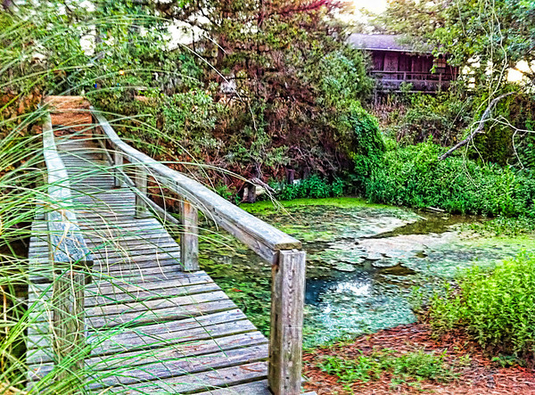 Swampy Bridge<br /> This swampy area of Camp Tejas, near Giddings, Texas, fed into a very pretty lake. Our end of it was where all the turtles and frogs hung out.