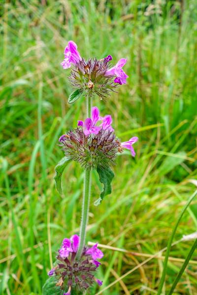 Herefordshire Nature Trust