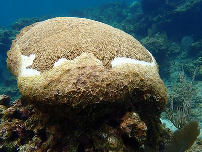 Reef Stress - Coral Bleaching