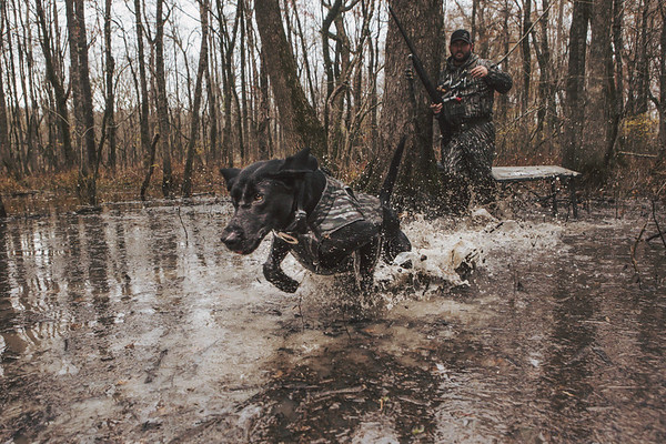 Brad Arington and Mo hunting the Arkansas flooded timber.
