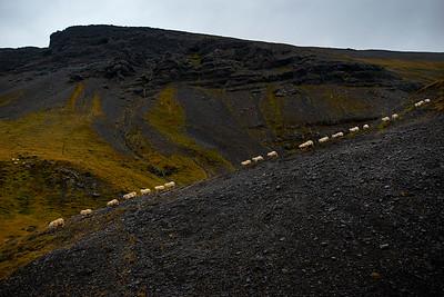 Sheeps Crossing