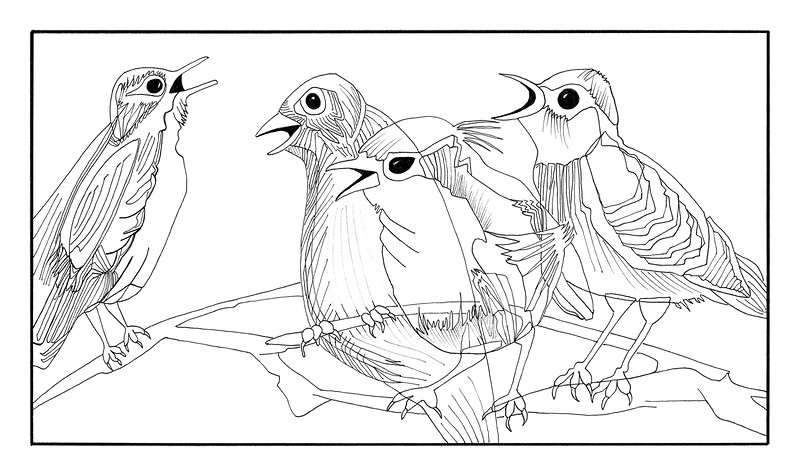 4 Calling Birds / ink on paper (unframed) / 94.5cm x 56.2cm @ 72dpi / original SOLD / image 0004