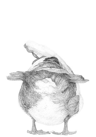 Untitled / ink on paper (unframed) / 59.4cm x 42cm / original £300 / image 0435