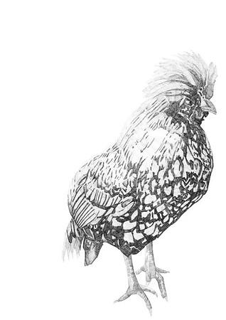Untitled / ink on paper (unframed) / 59.4cm x 42cm / original £300 / image 0431