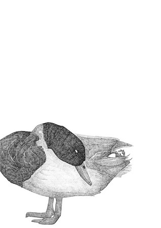 Untitled / ink on paper (unframed) / 59.4cm x 42cm / original £300 / image 0436