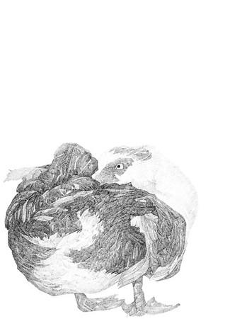 Untitled / ink on paper (unframed) / 59.4cm x 42cm / original £300 / image 0426