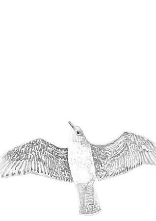 Untitled / ink on paper (unframed) / 59.4cm x 42cm / original £200 / image 0441