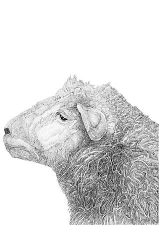 Untitled / ink on paper (unframed) / 59.4cm x 42cm / original £300 / image 0990