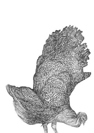 Untitled / ink on paper (unframed) / 59.4cm x 42cm / original £300 / image 1072