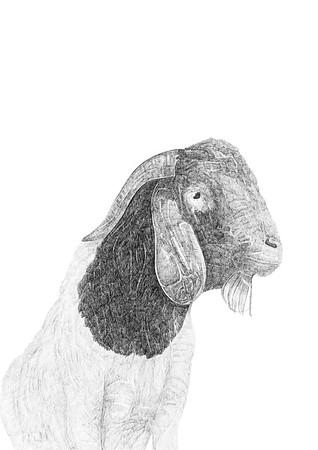 Untitled / ink on paper (unframed) / 59.4cm x 42cm / original £300 / image 1080