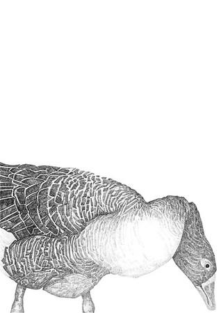Untitled / ink on paper (unframed) / 59.4cm x 42cm / original £300 / image 0440