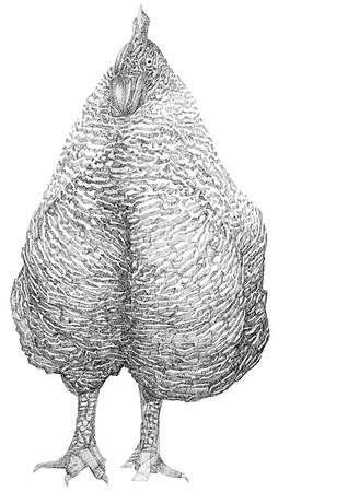 Untitled / ink on paper (unframed) / 59.4cm x 42cm / original £300 / image 1007