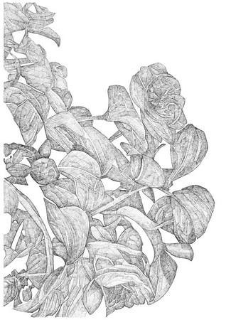 Untitled / ink on paper (unframed) / 59.4cm x 42cm / original £200 / image 0424