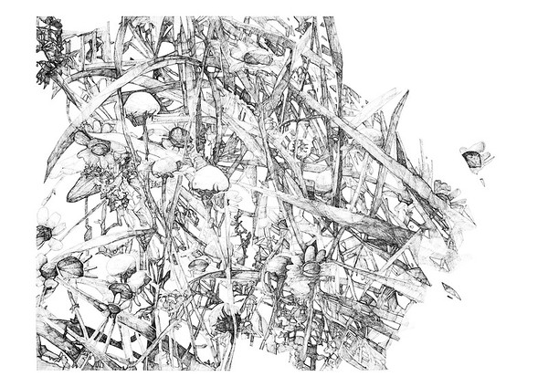 Untitled / ink on paper (unframed) / 59.4cm x 84.1cm / original SOLD / image 5208