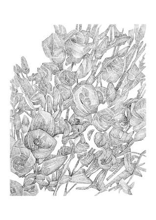 Untitled / ink on paper (unframed) / 59.4cm x 42cm / original £200 / image 0418
