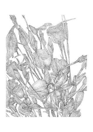 Untitled / ink on paper (unframed) / 59.4cm x 42cm / original £200 / image 0417