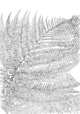 Untitled / ink on paper (unframed) / 59.4cm x 42cm / original £200 / image 0449