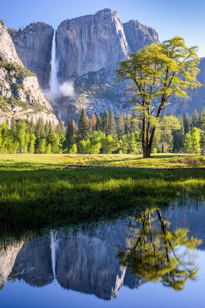 Illuminated Spring Foliage, Yosemite Falls