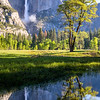 Illuminated Spring Foliage, Yosemite Falls