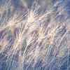 Dew Drop Grass 3