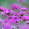 Delicate Pink Flower Bokeh