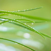 Wet Grass Abstract 5