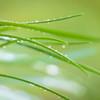 Wet Grass Abstract 5