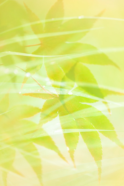 Japanese Maple and Grass Abstract
