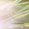 Wet Grass Abstract 3