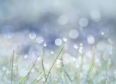 Frosty Grass Bokeh in Blue