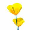 Poppy Simplicity