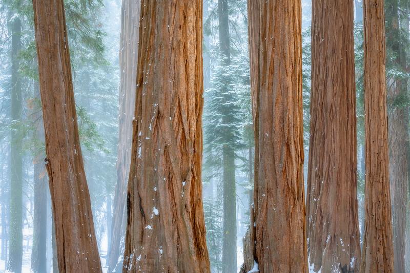 Uniform Sequoia Grove
