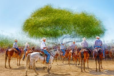 The Roper's Tree - Rancho Rio - Wickenburg, AZ.