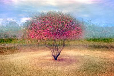 Desert Willow Tree - Wickenburg, AZ.