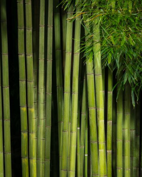Bamboo Pairing