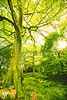 Moss Tree
