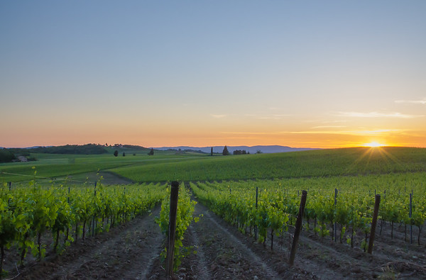 Vineyards at sunset, Tuscany