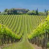 Vineyard around Castellina in Chianti, Tuscany