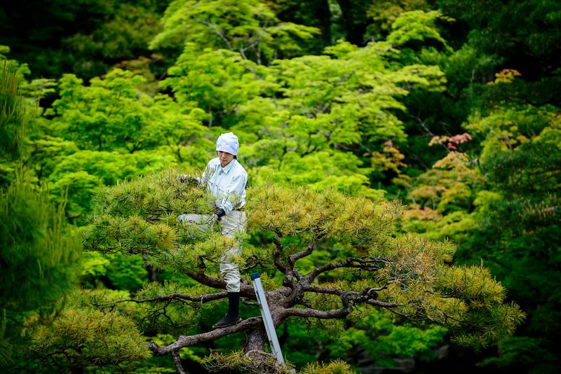 Kinkakuji park in Kyoto