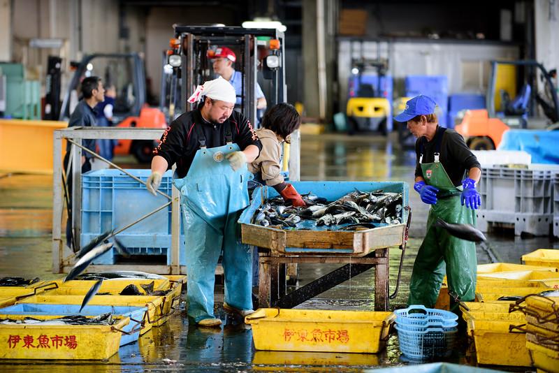Fish market in Ito, Shizuoka ward