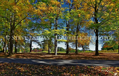 Trees with autumn leaves