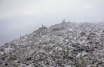 Sonoran Snow-Cap