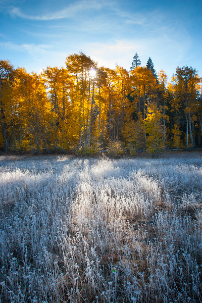 Paige Meadows Fall Frost