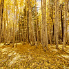 Fall foliage 2016 in Flagstaff