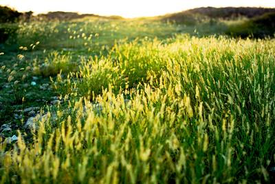 Soft Light on the Wild Grass