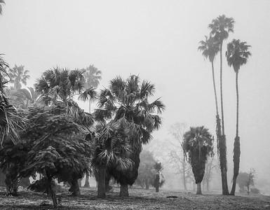 Woodland Hills-CA-02